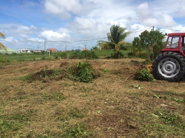 grasscare